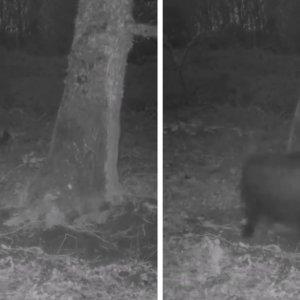 Dos cazadores van a revisar su cámara trampa y se encuentran con esta sorpresa