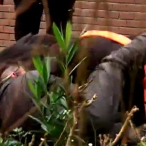 Un jabalí de 80 kilos irrumpe en un instituto de secundaria de Vizcaya
