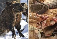 jabali mata a cazador