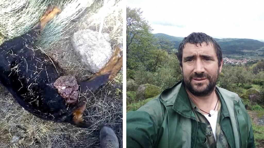 Un jabalí mata a una oveja a colmillazos en un vídeo en el que se ve cómo la acecha en repetidas ocasiones hasta acabar con ella.