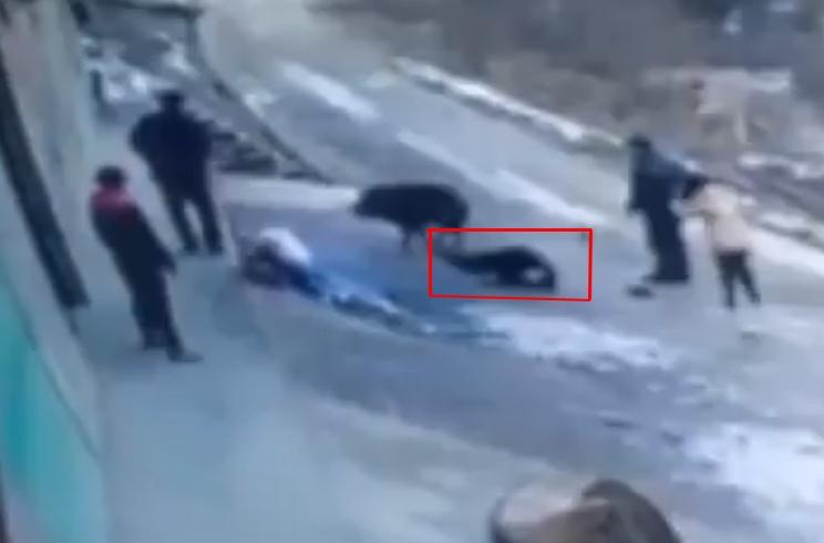 Un jabalí mata a un hombre y hiere de gravedad a una mujer