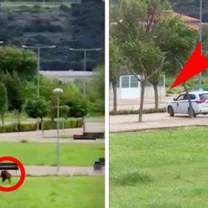Graban el momento en el que la Policía abre fuego contra un jabalí en un pueblo de Navarra