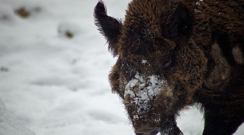 Un cazador descubre algo bajo la nieve, se acerca y recibe este brutal ataque