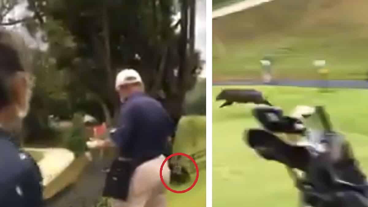 Un jabalí ataca a un golfista que se defiende con el palo