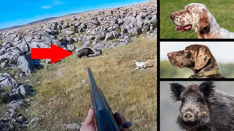 El cazador apunta al jabalí ante el pointer y el setter. / YouTube