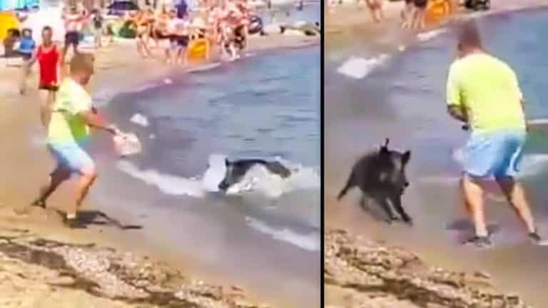 Dos momentos del ataque del jabalí en la playa. /YouTube