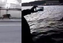 jabali pone a prueba agentes puerto marin