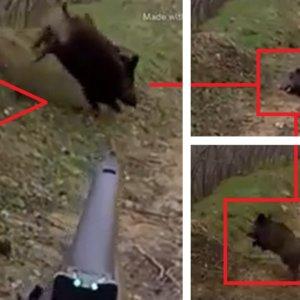 Lance increíble: Un jabalí 'resucita' y escapa tras el disparo de este cazador