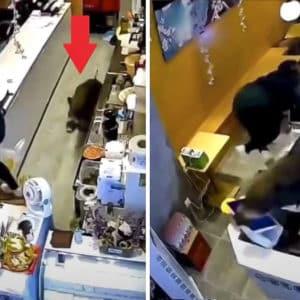 Un jabalí irrumpe en una tetería y la dueña se lanza por encima de la barra para escapar