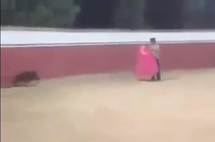 Esta 'faena' de un torero a un jabalí da la vuelta al mundo