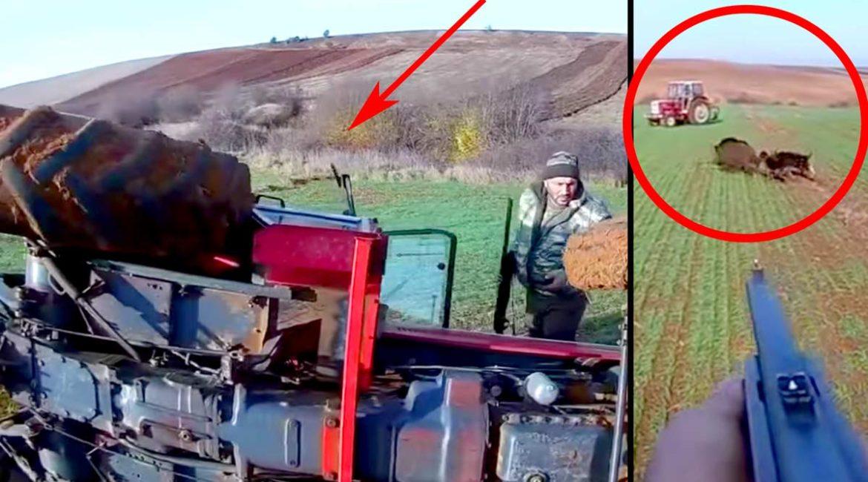 Cúmulo de despropósitos: vuelcan un tractor intentando dar caza a un gran jabalí