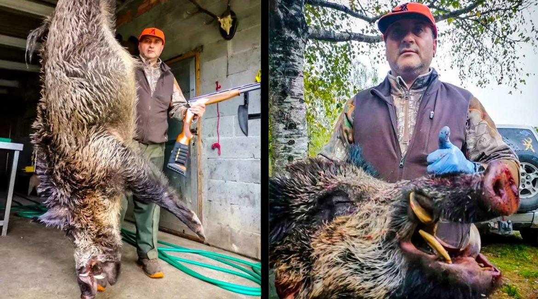 Cazan un descomunal jabalí 'vakamulo' en Galicia de 138 kilos con colmillos de 21 cms