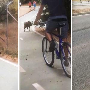 Un jabalí entra en Zamora y la lía: un coche se estrella y un hombre acaba en el hospital