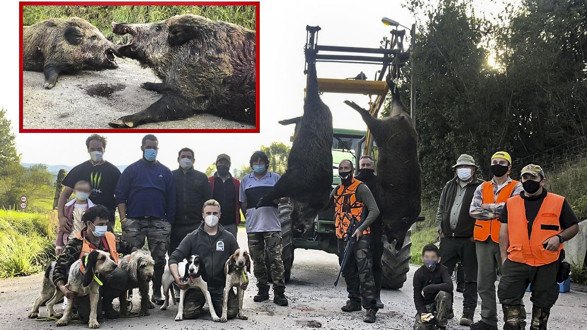 Esta batida de jóvenes cazadores acaba con sorpresa: cobran dos grandes jabalíes de 142 y 114 kilos