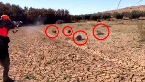 Increíble lance: abate cuatro jabalíes en 10 segundos con una escopeta