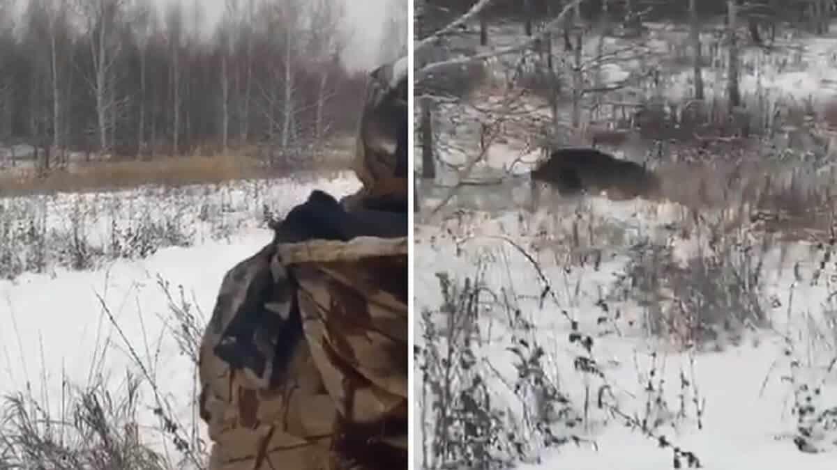 Esta es la peor pesadilla de un cazador de jabalíes