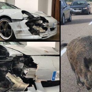 Un Porsche choca contra tres jabalíes en Galicia: «el arreglo costará 10.000 euros»