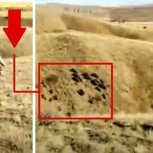 Varios cazadores protagonizan una querenciosa asomada y una enorme piara de jabalíes se les arranca