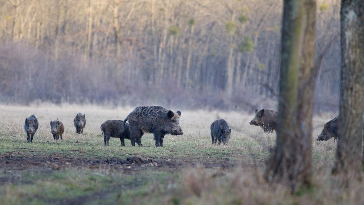 ENCUESTA: ¿Permitirías la caza durante el estado de alarma?
