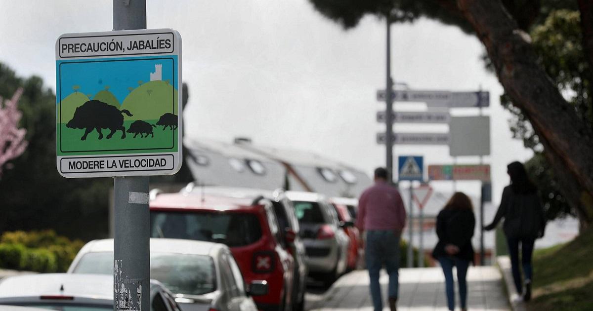El jabalí se convierte en un problema en la Comunidad de Madrid