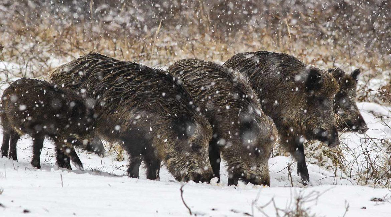 Cómo saber si va a nevar en tu coto de caza este fin de semana