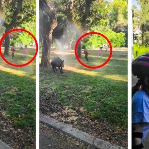 Niños jugando entre jabalíes: otra gran imprudencia durante el estado de alarma