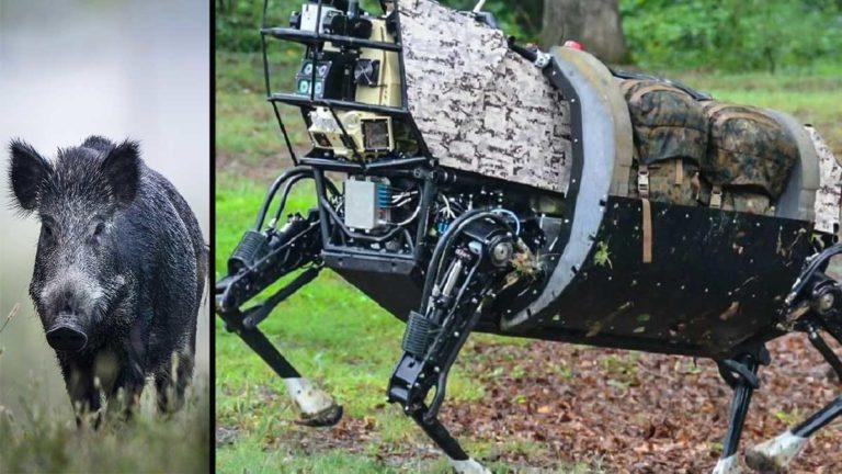 Jabalí y robot. @Shutterstock