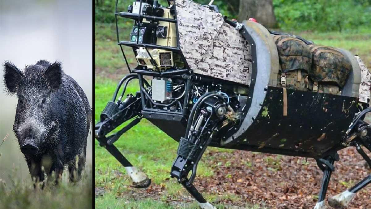 Proponen sustituir a los jabalíes por robots en las cacerías de Francia