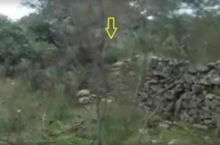 Dos jabalíes saltan por encima de una valla de piedra y se la juegan a este cazador