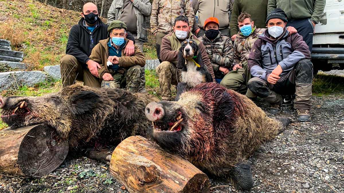 Un grupo de cazadores empieza 2021 a lo grande: cazando dos jabalíes 'vakamulos'