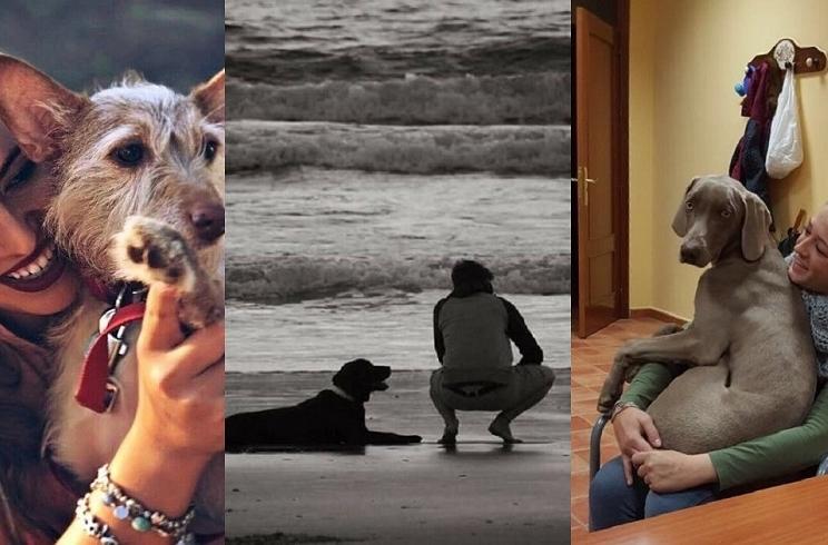 Cientos de cazadores inundan las redes con fotos de sus perros