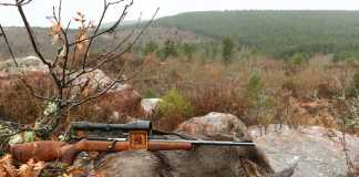 jornadas caza de corzas ACE