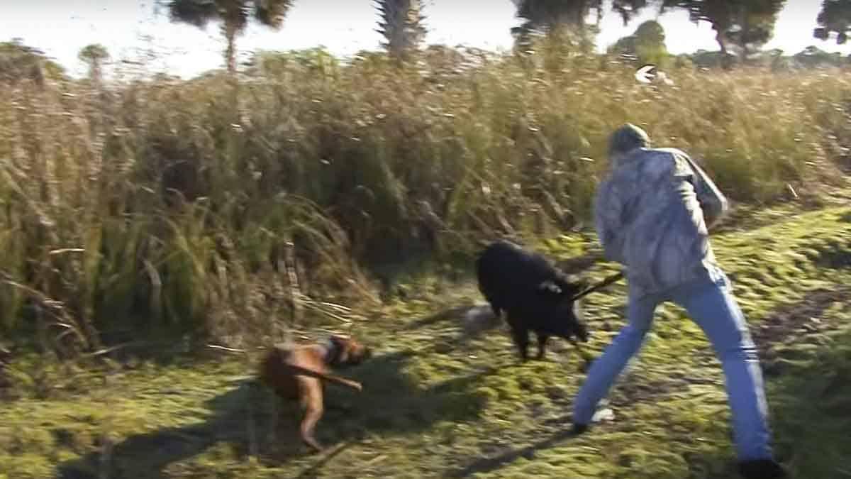 Este joven ha decidido volver a cazar jabalíes con lanza