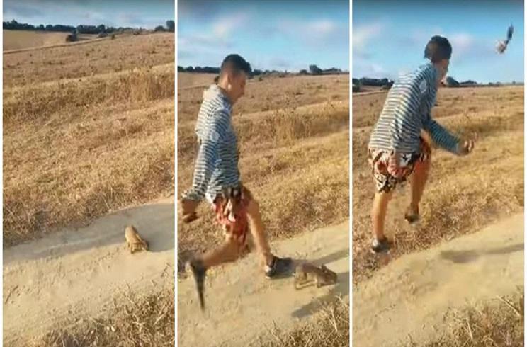 joven patea a un conejo