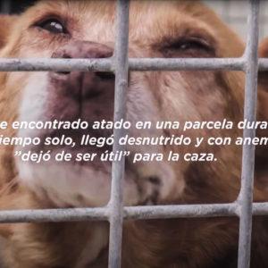 Los cazadores llaman al boicot de Kiwoko después de publicar un vídeo sobre abandono de perros