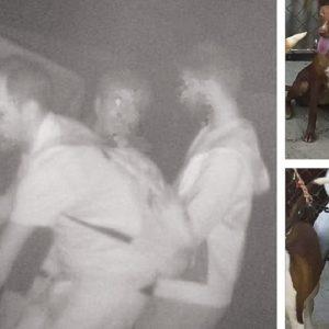 Detienen a los ladrones de perros de caza que fueron pillados por una cámara de seguridad