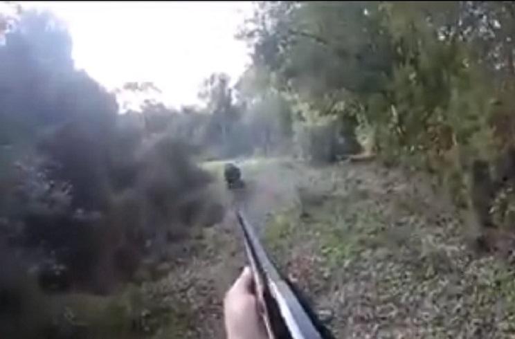 Dispara a un jabalí que le venía literalmente de frente