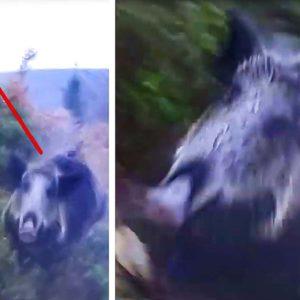 Un jabalí sorprende a un cazador en un cara a cara de infarto