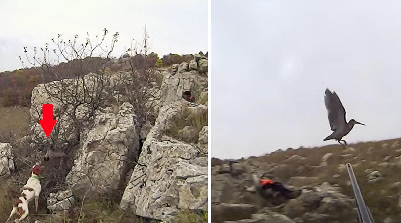 Dos perros de caza muestran una becada en un lance de extraordinaria belleza