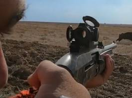 jabalí con escopeta