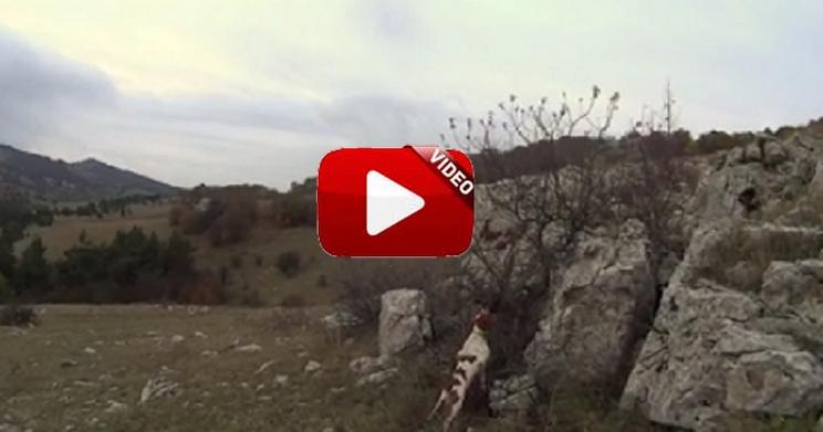 Dos perros muestran una becada y cuando salta, el lance es espectacular