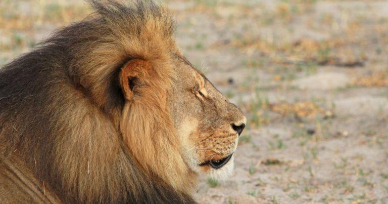 leon-cecil