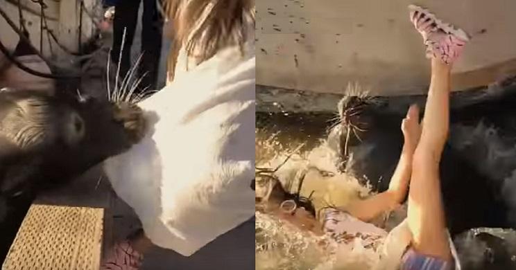 Un león marino ataca a una niña y la sumerge bajo el agua