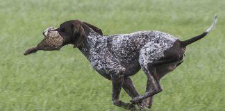ley de proteccion de los animales perros de caza