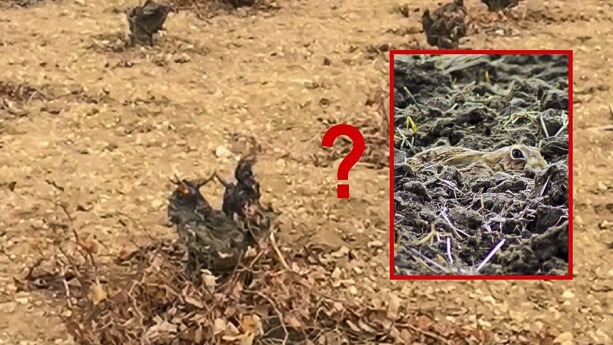 Reto visual: ¿Eres capaz de ver esta liebre encamada antes de que salte?