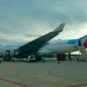 Una liebre obliga a un avión a tomar tierra en Palma de Mallorca