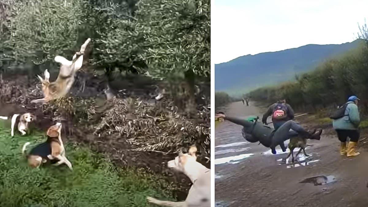 Una liebre salta sobre cinco perros y un galgo arrolla a un cazador ¿qué más puede salir mal?