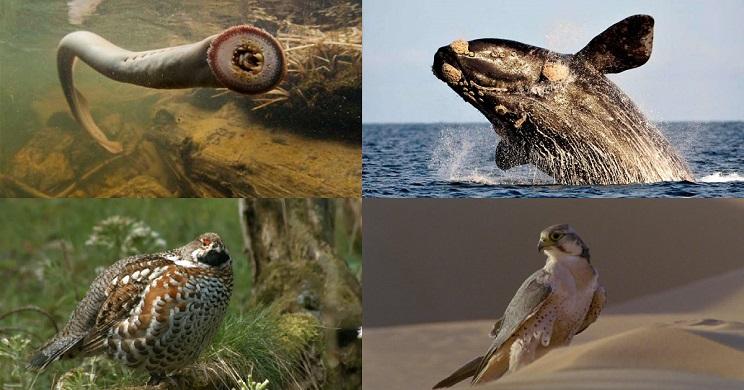 listado especies extinguidas españa