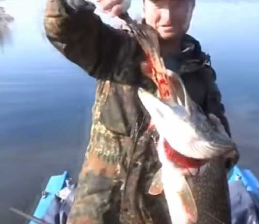 lo que encontraron dentro de estos peces
