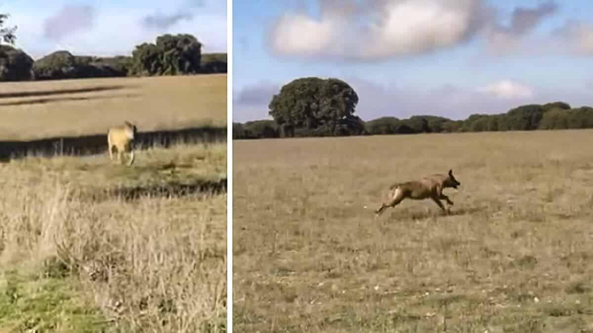 Mira lo que hace este cazador cuando un lobo entra en su puesto